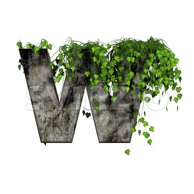 ivy font W - Capital 3d letter Stock Photo
